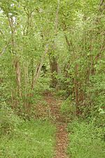 284 woodland trail lugoff sc