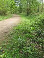 Woodland track, Queen's Wood - geograph.org.uk - 1287346.jpg