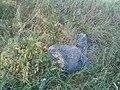 Woynillowicz family hill in Sawiczy - gravestone 4.jpg