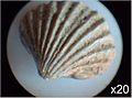 Wrens Nest Fossils 5.jpg