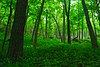 Wyalusing Hardwood Forest.jpg