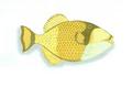 XRF-Balistoides viridescens.png