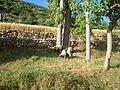 Yayladağı keçi ve koyunlar.JPG