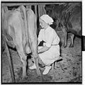 Yrkestevlinger, jordbruk - Fo30141603040004 1.jpg