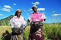 Zambian Women Hold Bags of Tilapia Fingerlings.jpg