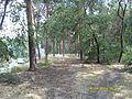 Zheleznodorozhnyy rayon, Voronez, Voronezhskaya oblast', Russia - panoramio (48).jpg