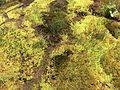 Zone marécageuse en Vanoise.JPG