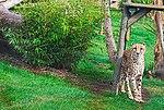 Zoo de Lisboa by Juntas 71.jpg