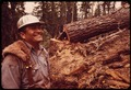 """FALLER"" D.JACKSON AND FELLED RED FIR TREE - NARA - 542781.tif"