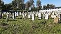 Єврейське кладовище м. Хмельницький 14.jpg
