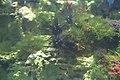 "Аквариум в павильоне ""Москвариум"", ВВЦ, Москва - panoramio (66).jpg"