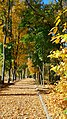 Ботанічний сад Дніпро ДНУ.jpg