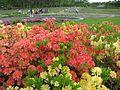 Ботанічний сад ім. М.Гришка IMG 9980.jpg