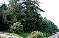 Вид на парк с Бакинской улицы.JPG