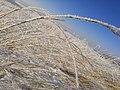 Возле мининских столбов . Зимой 2.jpg