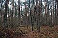 Глибокий ліс IMG 4278.jpg