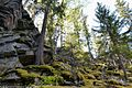 Гора Пихтовая - 2.jpg