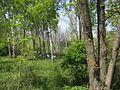 Дендрологічний парк 182.jpg