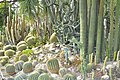 Кактуси ботанічного саду.jpg