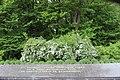 Могила братська радянських воїнів (49 осіб) IMG 6691.jpg