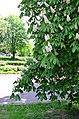 Наводницкий парк в Киеве. Фото 91.jpg
