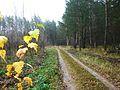 На п.Дачный - panoramio.jpg