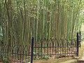 Парк санаторію Карасан. Бамбукова роща.JPG