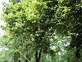 Парк шума Гази Баба во мај (11).JPG
