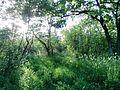 """Парк шума """"Гази Баба"""" 90.jpg"""