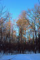 Пуща-Водицький лісопарк 29.JPG