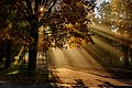 Ранкові промені. Осінь.jpg