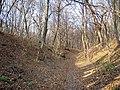 Украина, Киев - Голосеевский лес 220.JPG