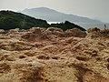 جبل شنوة مدينة تيبازة.jpg