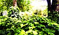 حجم سبز - panoramio.jpg