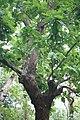 মধুপুর জাতীয় উদ্যানের বৃক্ষ ১.jpg