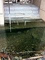 ホテルの入り口が海水に沈んでいる。 - panoramio.jpg