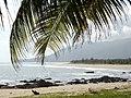 沙滩椰林 - panoramio.jpg