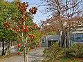 近つ飛鳥風土記の丘 駐車場にて 2013.3.16 - panoramio.jpg