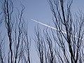飞机划过 - panoramio.jpg