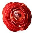 - Flower 07 -.jpg
