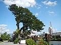 02584fvfBarangays Poblacion Stephen Academy Church Town Laur Nueva Ecijafvf 03.JPG