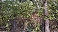 05玄武门遗址-宁西宾馆停车场北侧围栏内夯土台基.jpg
