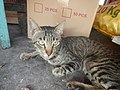 0560Cat portraits in the Philippines 16.jpg