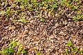11-11-06-herbsttexturen-by-RalfR-03.jpg