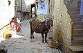1996 -216-18 Jaisalmer (2233388375).jpg