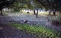 1996 -223-14A Sariska Tiger Reserve (2234193446).jpg