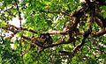 2004-03-27-Chimpanzee-eatin.jpg
