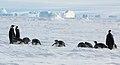 2007 Snow-Hill-Island Luyten-De-Hauwere-Emperor-Penguin-93.jpg