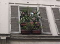 2008 windowbox Paris 2706316810.jpg