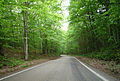 2009-0619-UP022-TunnelofTrees.jpg